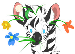 Size: 1225x884 | Tagged: safe, artist:smallzeeb, oc, oc only, zebra, bust, cute, eating, eating flower, flower, flower in hair, herbivore, horses doing horse things, male, portrait, simple background, solo, white background, zebras doing zebra things