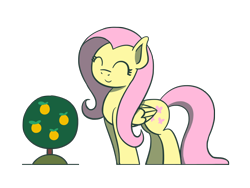 Size: 1800x1350 | Tagged: safe, artist:flutterluv, fluttershy, pegasus, pony, cute, eyes closed, female, fluttershy day, mare, orange tree, shyabetes, simple background, solo, transparent background, tree