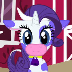Size: 1750x1746 | Tagged: safe, artist:zethbsoul, rarity, cow, applejack's barn, bell, bell collar, collar, cowbell, cowified, raricow, species swap