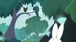 Size: 1920x1080 | Tagged: safe, screencap, angel bunny, fluttershy, bird, eagle, she talks to angel, body swap