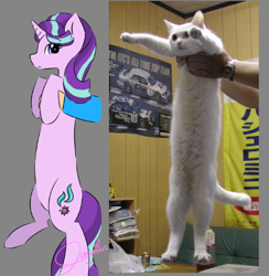 Size: 422x432 | Tagged: safe, artist:jaezmien, starlight glimmer, cat, pony, unicorn, irl, long pony, longcat, photo, solo