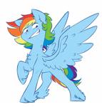 Size: 1478x1545   Tagged: safe, artist:chub-wub, rainbow dash, pegasus, pony, alternate hairstyle, chest fluff, ear fluff, feathered fetlocks, female, leg fluff, mare, neck fluff, raised hoof, simple background, smiling, smug, solo, white background