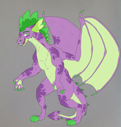 Size: 1897x1995 | Tagged: safe, artist:nightshade2004, spike, dragon, alternate design, gray background, older, simple background, solo, winged spike