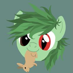 Size: 525x525 | Tagged: safe, artist:catpone cerberus, oc, oc:mwana wamsitu, avatar, forest pony, heterochromia, male, solo, stallion