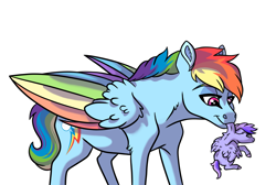 Size: 3885x2607 | Tagged: safe, artist:venommocity, rainbow dash, oc, oc:astra, pegasus, pony, baby, baby pony, carrying, colored wings, female, filly, foal, holding a pony, mare, mother and child, mother and daughter, mouth hold, multicolored wings, offspring, parent:dumbbell, parent:rainbow dash, parents:dumbdash, rainbow wings, scruff, simple background, smol, white background, wings