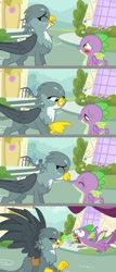 Size: 1024x2385 | Tagged: safe, artist:silverbuller, edit, gabby, spike, dragon, griffon, bad timing, bedroom eyes, blushing, burp, female, imminent kissing, letter, male, shipping, spabby, straight, winged spike
