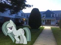 Size: 3264x2448 | Tagged: safe, artist:mrkupkake, artist:topsangtheman, marble pie, earth pony, pony, house, irl, looking at you, photo, ponies in real life, tree
