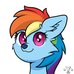 Size: 1980x1980 | Tagged: safe, artist:yelowcrom, rainbow dash, wolf, atg 2020, bust, cute, female, looking at you, newbie artist training grounds, solo, species swap, wolf dash, wolfified