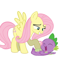 Size: 1080x1080 | Tagged: safe, alternate version, artist:princessdestiny200i, fluttershy, spike, dragon, pegasus, pony, cute, duo, female, grin, laughing, male, mare, raised hoof, simple background, smiling, spikabetes, tickling, white background