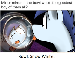 Size: 535x426 | Tagged: safe, artist:sugar morning, edit, oc, oc only, oc:slipstream, pony, :p, boofy, caption, collar, irl, male, meme, photo, ponified animal photo, pot, reflection, silly, snow white, solo, stallion, tongue out, wat, wide eyes