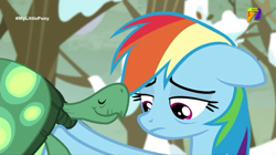 Size: 540x303 | Tagged: safe, screencap, rainbow dash, tank, tanks for the memories, azteca 7, sad, tv azteca
