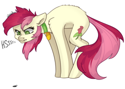 Size: 2500x1780   Tagged: safe, artist:chibadeer, roseluck, pony, angry, behaving like a cat, collar, cute, fluffy, hissing, pet tag, pony pet, rosepet
