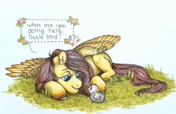 Size: 1600x1045 | Tagged: safe, artist:bloodyblackquiet, fluttershy, bird, butterfly, pegasus, pony, chick, dialogue, ear fluff, female, flower, grass, looking at each other, looking at someone, lying down, mare, on side, open mouth, prone, simple background, smiling, solo, speech bubble, spread wings, traditional art, unshorn fetlocks, white background, wings