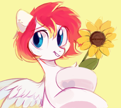 Size: 2800x2500 | Tagged: safe, artist:_mpiesocks, artist:raily, oc, oc only, oc:spectrum beam, pegasus, pony, chest fluff, flower, looking away, pegasus oc, sketch, solo, spread wings, sunflower, wings