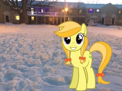 Size: 3264x2448 | Tagged: safe, artist:daringdashie, artist:topsangtheman, jonagold, marmalade jalapeno popette, earth pony, pony, apple family member, christmas, christmas lights, holiday, house, irl, looking at you, photo, ponies in real life, snow, solo