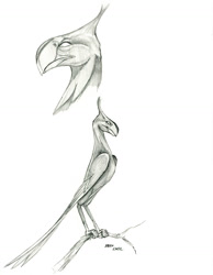 Size: 1000x1288   Tagged: safe, artist:baron engel, phoenix, monochrome, pencil drawing, traditional art
