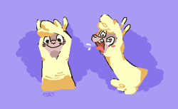 Size: 450x275 | Tagged: safe, artist:rainfallbeats, paprika paca, alpaca, them's fightin' herds, looking at you, screaming, smiling, solo