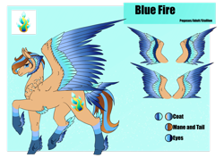 Size: 1920x1358 | Tagged: safe, artist:oneiria-fylakas, oc, oc:blue fire, pegasus, pony, colored wings, male, multicolored wings, reference sheet, solo, stallion, tail feathers, wings