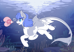 Size: 3507x2481 | Tagged: safe, artist:arctic-fox, oc, oc only, oc:snow pup, fish, original species, shark, shark pony, birbshark, bubble, collar, female, high res, mare, pet tag, solo, species swap, swimming, teeth, underwater