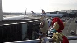 Size: 2064x1161   Tagged: safe, artist:jasterfox90, oc, oc:aurora harmony, oc:unity (brony fair), airport, germany, lufthansa, plane, plushie