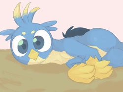Size: 1024x768 | Tagged: safe, artist:noupu, gallus, griffon, behaving like a cat, birb, catbird, cute, gallabetes, looking at you, lying down, male, solo, wings