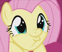 Size: 711x596   Tagged: safe, screencap, fluttershy, pegasus, pony, season 9, sweet and smoky, spoiler:s09, cropped, cute, daaaaaaaaaaaw, duckface, female, hnnng, mare, shyabetes, so awesome, solo