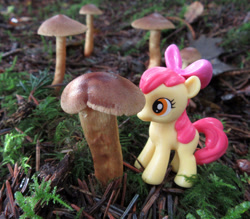 Size: 1280x1123 | Tagged: safe, artist:travelling-my-little-pony, apple bloom, female, filly, fungus, irl, mushroom, photo, solo, toy