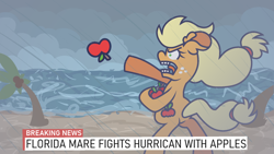 Size: 1920x1080 | Tagged: safe, artist:threetwotwo32232, applejack, earth pony, pony, apple, bipedal, breaking news, female, florida, florida man, food, hurricane, island, mare, misspelling, newbie artist training grounds, open mouth, rain, silly, silly pony, solo, who's a silly pony, wind