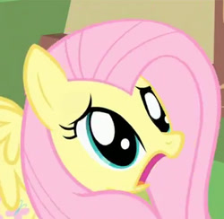 Size: 356x347 | Tagged: safe, screencap, fluttershy, pegasus, pony, party of one, adorable distress, cropped, cute, d:, female, frown, horrified, mare, open mouth, reaction image, scared, shocked, shyabetes, solo, spread wings, wings