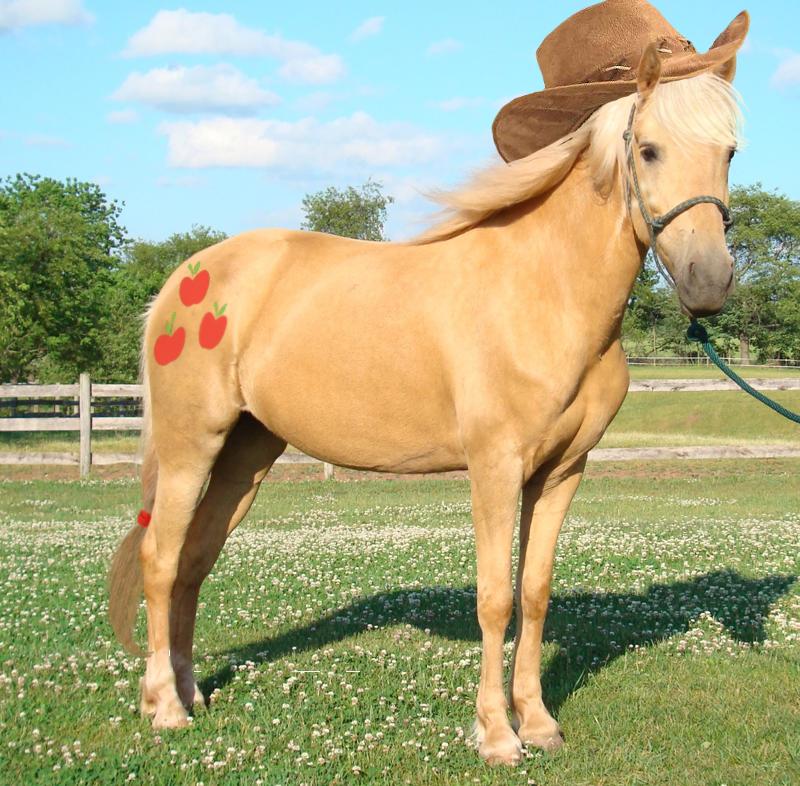 272920 applejack edit fence horse irl photo ponies in real